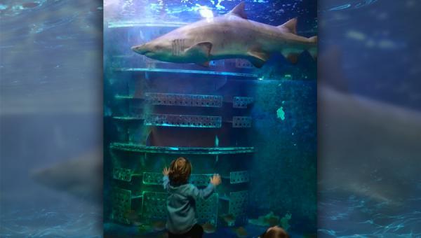 Journée à l'aquarium de St Malo